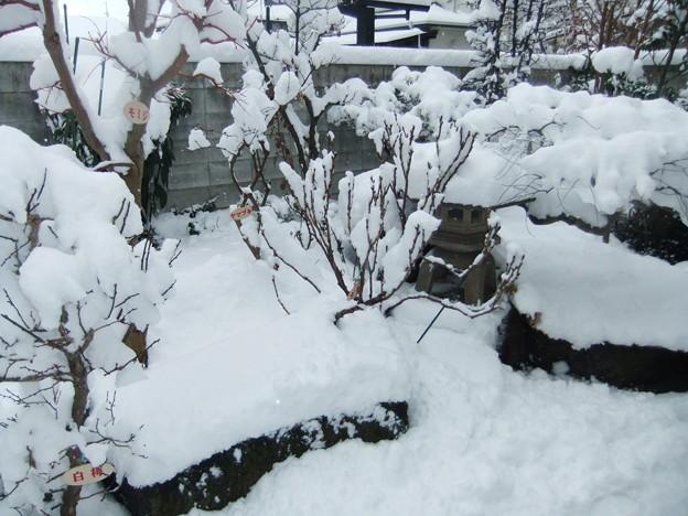 雪に埋まった庭