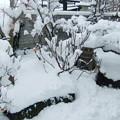 写真: 雪に埋まった庭