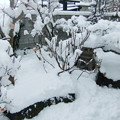 Photos: 雪に埋まった庭