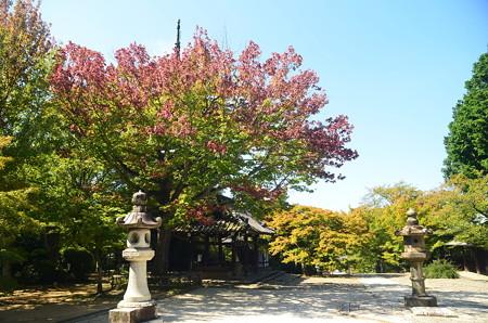 色づき始  めた花の木
