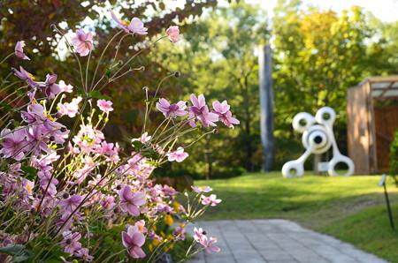 秋明菊のある光景