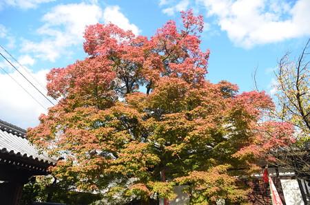 本満寺の紅葉