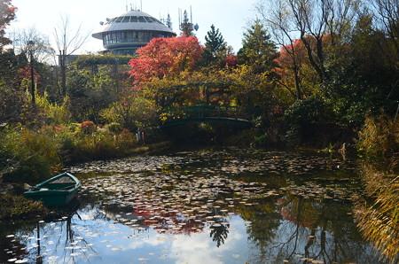 モネの池の彩り