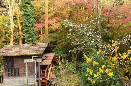 水車小屋と山茶花