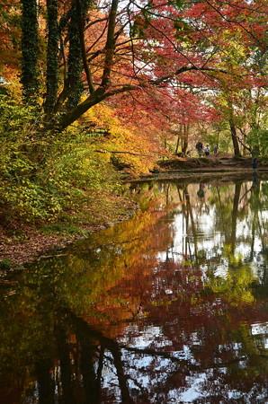 秋を映す水面