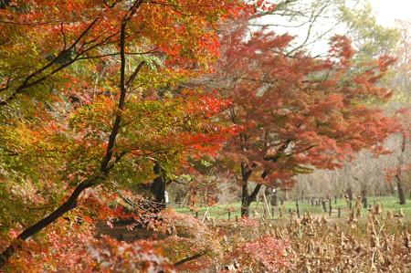 紅葉と枯れ蓮
