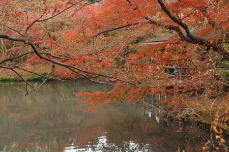 池を取り巻く紅葉