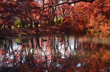 秋景を泳ぐ