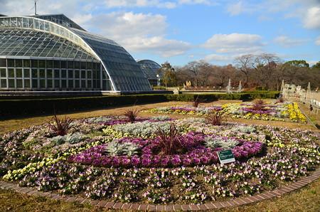 初冬の植物園