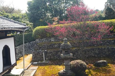 紅梅咲く庭園
