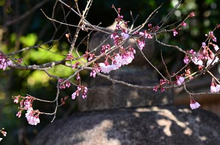 宗像神社の小彼岸(コヒガン)
