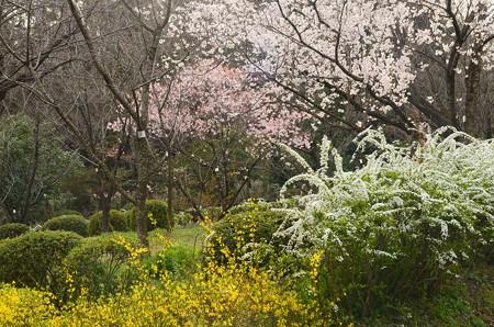 桜品種見本園