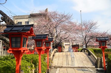 六孫王神社の染井吉野
