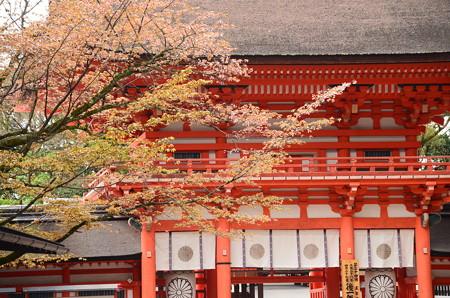 楼門と山桜