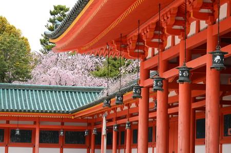 平安神宮の桜風景
