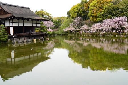 栖凰池を彩る桜