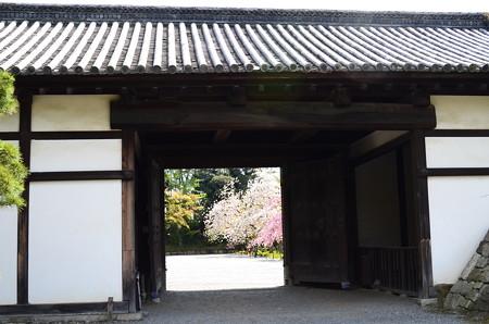 桃山門と桜