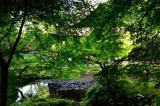 緑に包まれる池