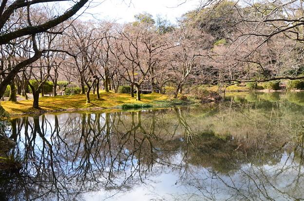 冬枯れの池