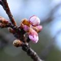 写真: 春はそこまで~