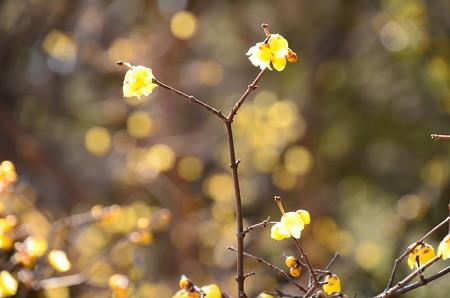 黄色の輝き~