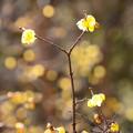 写真: 黄色の輝き~