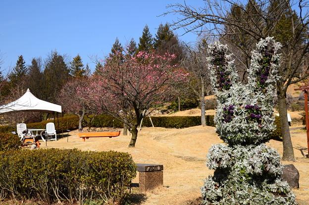梅の季節の宇治市植物公園