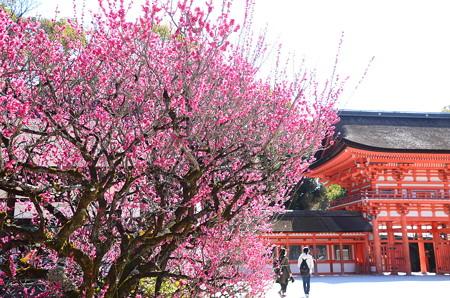 光琳の梅咲く下鴨神社