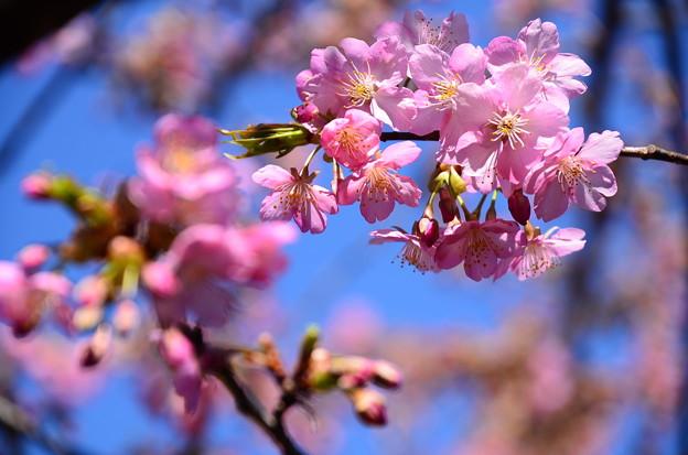春の一枚~