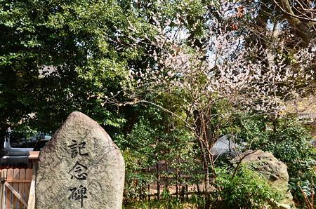 記念碑脇の白梅