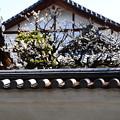 龍見院の白梅