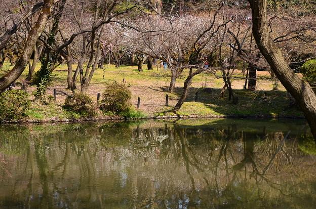 植物園梅林