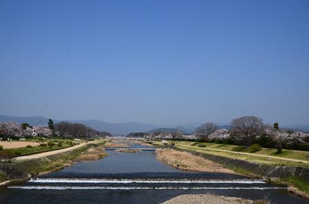 桜咲く賀茂川