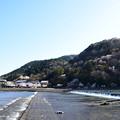 保津川と嵐山の桜
