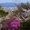 嵐山公園の桜風景