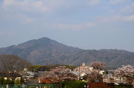 比叡山を登る桜