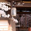 Photos: 窓桜
