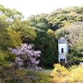 栖霞楼(せいかろう)と桜