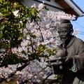 桜の前の油祖像