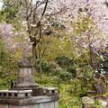 Photos: 金色不動堂へ