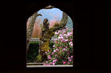 石楠花の咲く風景