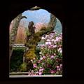 写真: 石楠花の咲く風景