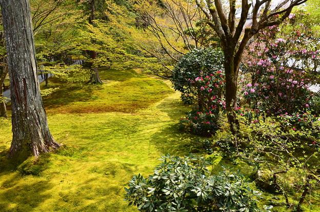 桜と石楠花の有清園