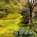 写真: 桜と石楠花の有清園