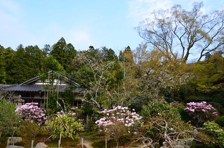 石楠花の実光院