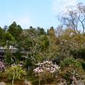 写真: 石楠花の実光院