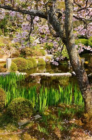 散り桜に飾られた池