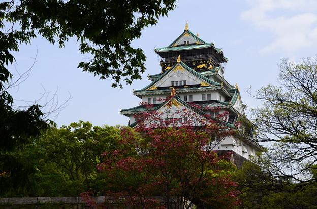 花水木咲く大阪城