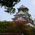 写真: 花水木咲く大阪城