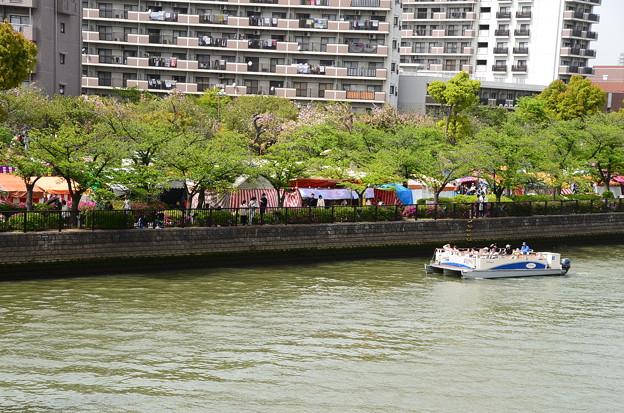 大川と造幣局の桜